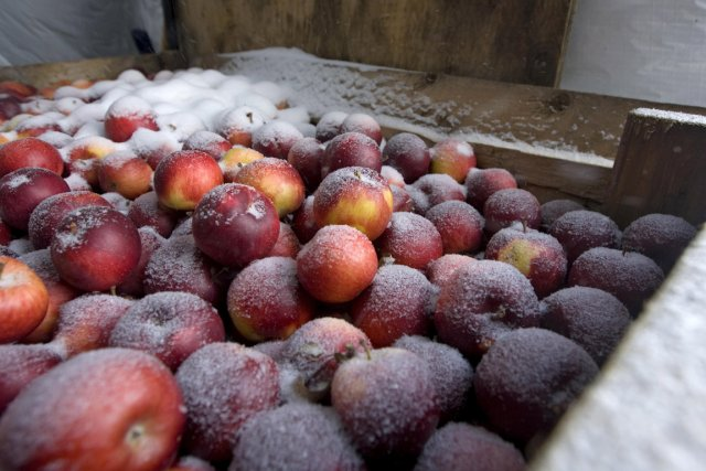 Des pommes qui serviront pour la fabrication du... (Photo: Alain Roberge, archives La Presse)