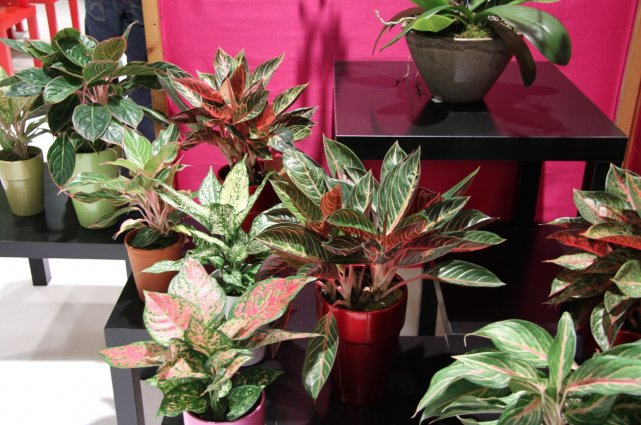 De Nouveaux Coloris Pour Une Plante Verte Classique Larry Hodgson Collaboration Sp Ciale