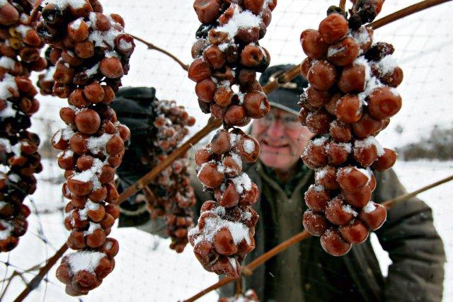 Les producteurs de vin de glace du Québec... (Photothèque Le Soleil)