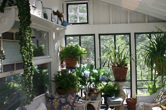 Journ e spa pour plantes d 39 int rieur larry hodgson for Les plantes interieur