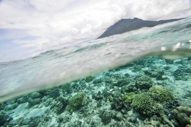 Les risques pesant sur les barrières de corail... (Photo: Romeo Gacad, Archives AFP)