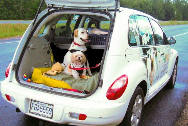 Pet Taxi a été fondé en 2009.... (Photo fournie par Pet Taxi)