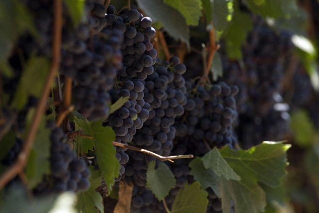 Ces fruits ont déjà la réputation de contribuer... (Photo AFP)