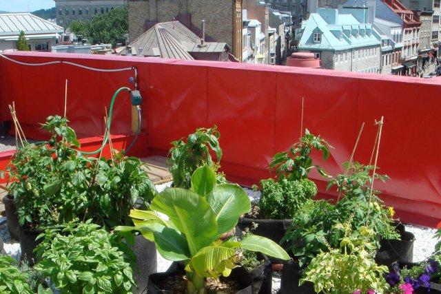 Cultiver en pots est une bonne façon de... (Urbainculteurs)