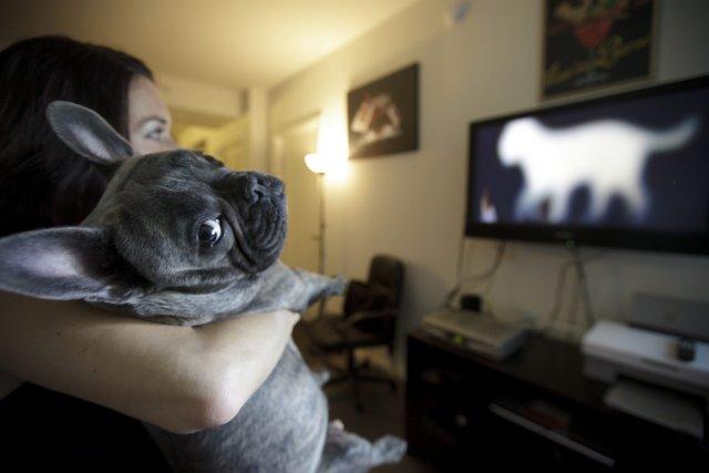 Les chiens ont maintenant une chaîne de télévision... (Photo Gregory Bull, AP)