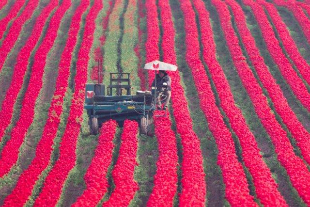 L'enquête confirme les observations rapportées par des agriculteurs... (Photo:  Jens Wolf, AFP)