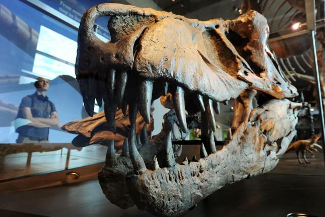 Une exposition sur les dinosaures dans un musée.... (PHOTO AFP)