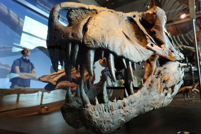 Des scientifiques ont «pris» la température de dinosaures vieux de près de 80... (PHOTO AFP)