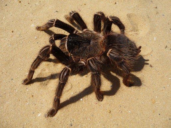 Grèce : une toile d'araignée géante ceinture un lac