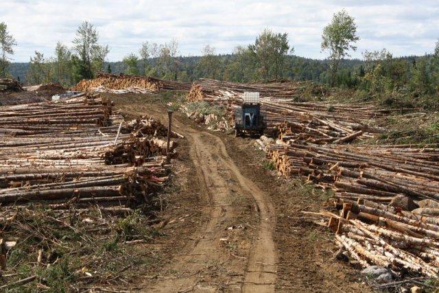 L'exploitation forestière est au coeur du conflit atikamekw.... (Photo: Gabriel Delisle)