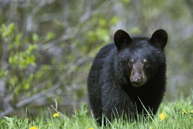 Un randonneur de 22 ans qui se promenait dans une réserve naturelle à une heure... (Photo Serge Ouellet, Parcs Canada)
