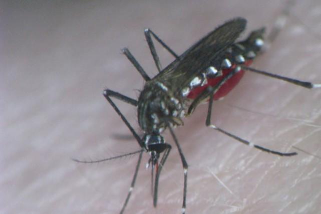 La dengue est une maladie infectieuse transmise par... (Photo Reuters)