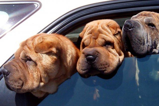 Envie d'une petite virée en auto aux États-Unis? Bonne idée, mais pas question... (Photo archives La Presse)