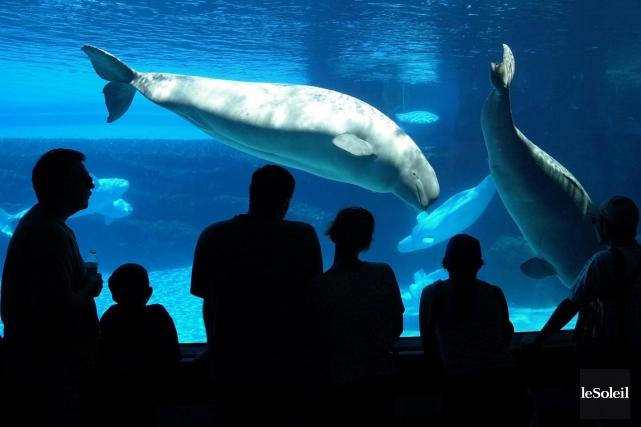 Des baleines dans le parc aquatique Marineland, à... (Photothèque Le Soleil)
