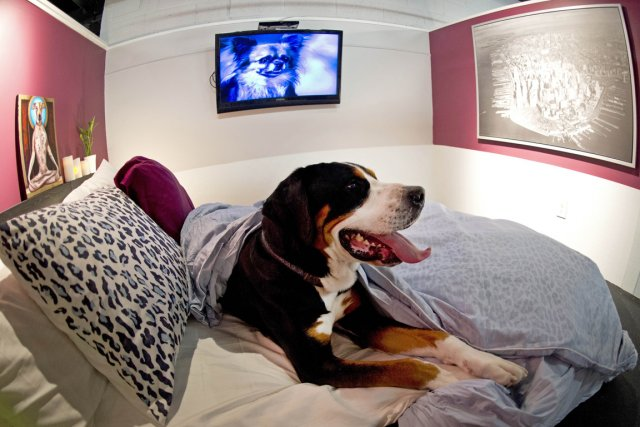 H tels de luxe pour chiens un filon en plein boom nouvelles for Hotels qui acceptent les chiens