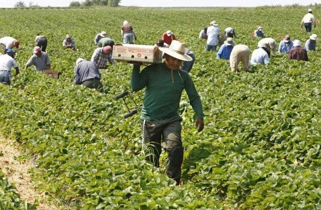 Il y a près de chez moi 47 travailleurs agricoles guatémaltèques qui...