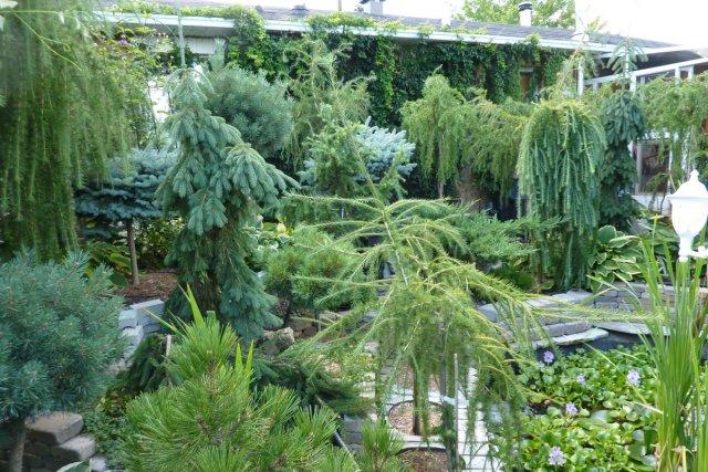 La for t blanchette pierre gingras jardiner for Amenagement jardin foret