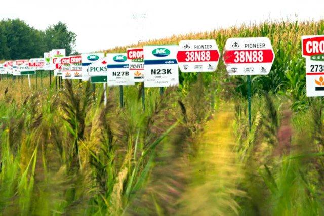 Monsanto fabrique des semences génétiquement modifiées.... (Photothèque Le Soleil)