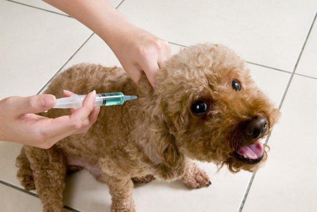 Le diabète est largement répandu chez le chien.... (PHOTO ARCHIVES GETTY)