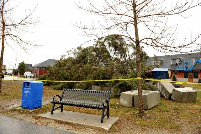 Les forts vents de la nuit de mardi à mercredi ont eu raison de l'arbre de ... (Imacom, Claude Poulin)