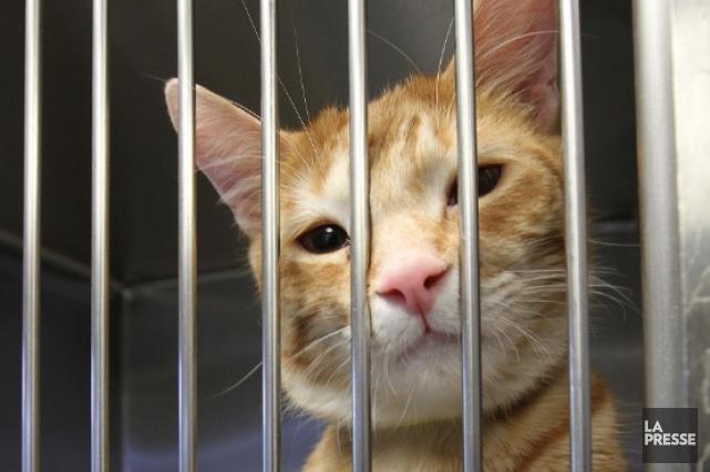 Une femme de l'Est ontarien a retrouvé, ce week-end, son chat perdu depuis 15... (Le Soleil, Jocelyn Bernier)