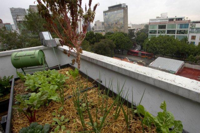 De plus en plus de toîts vert font... (Photo Pedro Pardo, Agence France-Presse)