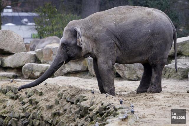 Un parc animalier du nord-est des Pays-Bas est prêt à se séparer gratuitement... (Photo: AFP)