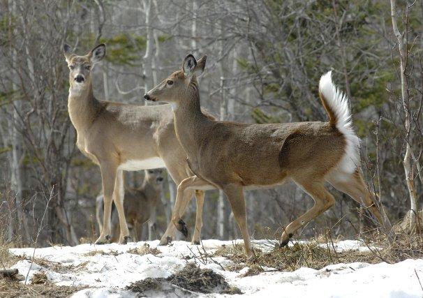 Les agents de protection de la faune ont mis fin aux activités d'un  important... (Archives La Tribune)