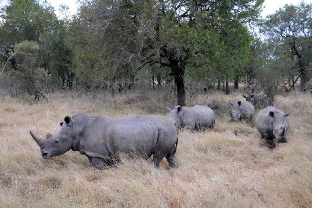 Le paisible paysage de broussailles et d'acacias de la réserve animalière de... (Photo: AFP)
