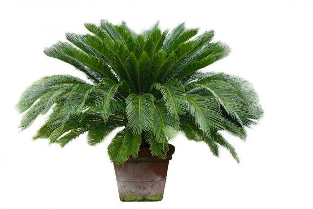 La plante qui surv cut aux dinosaures larry hodgson for Plante maison