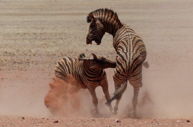 Les animaux, comme les superbes éléphants, se regroupent... (Collaboration spéciale, Yves Ouellet)