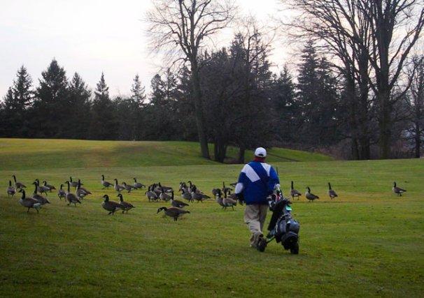 Quelques golfeurs de la région ont profité de... (Patrick Woodbury, LeDroit)