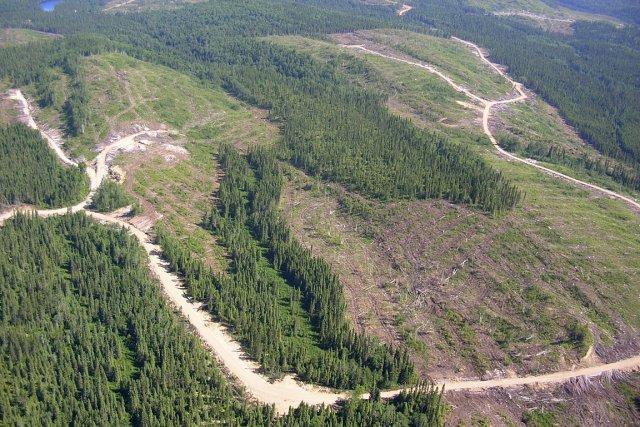 Canopy accuse Résolu d'avoir fait des coupes forestières... (Photo: Simon Diotte, collaboration spéciale)