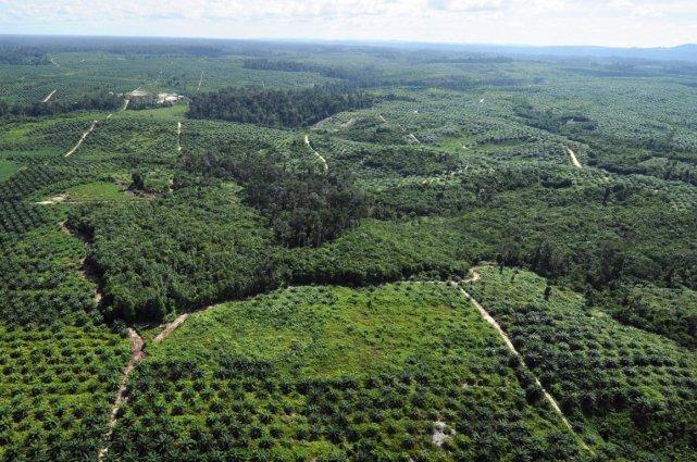 Paysage de l'île de Bornéo.... (Photo AFP)