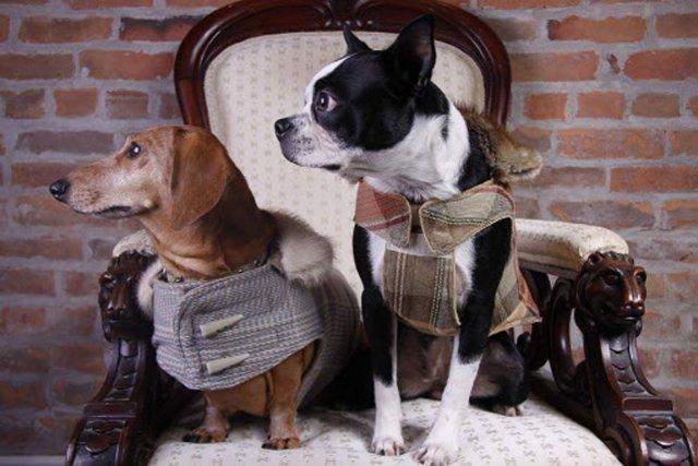 Petits manteaux pour chiens fabriqués sur mesure par... (Photo fournie par l'entreprise à Quatre pattes.)