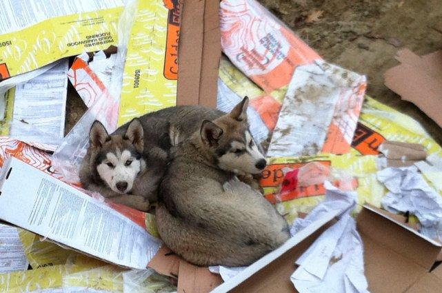 Deux chiens qui s'enfuient puis qui sont retrouvés,... (Jessy Laflamme, LeDroit)