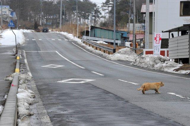 L'accident nucléaire de Fukushima a entraîné le départ... (Photo: archives AFP)