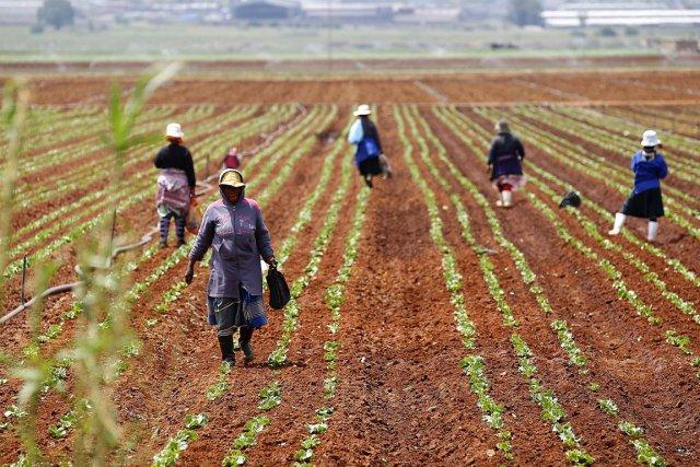 La «révolution verte» dans l'agriculture, qui a permis de nourrir une... (Photo: Reuters (Archives))