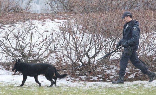 La police de Gatineau a lancé son escouade canine sur le terrain, jeudi, alors... (Étienne Morin, Archives LeDroit)
