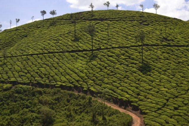 Le Sri Lanka est reconnu pour la qualité... (Photo: Raymond Gervais, La Presse)