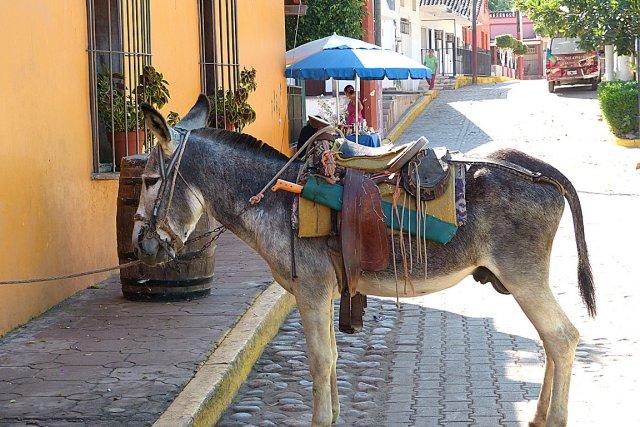 À 45minutes de Mazatlán, on peut visiter un... (Sylvie Ruel, collaboration spéciale)