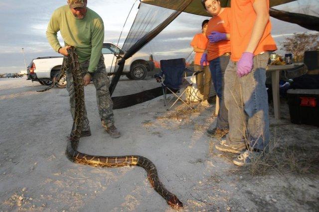 Bill Booth étend un python birman décédépour que... (PHOTO WILFREDO LEE, AP)