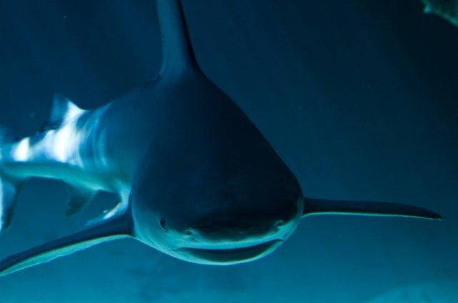 La peau de requin est connue depuis plus... (Photo RelaxNews)