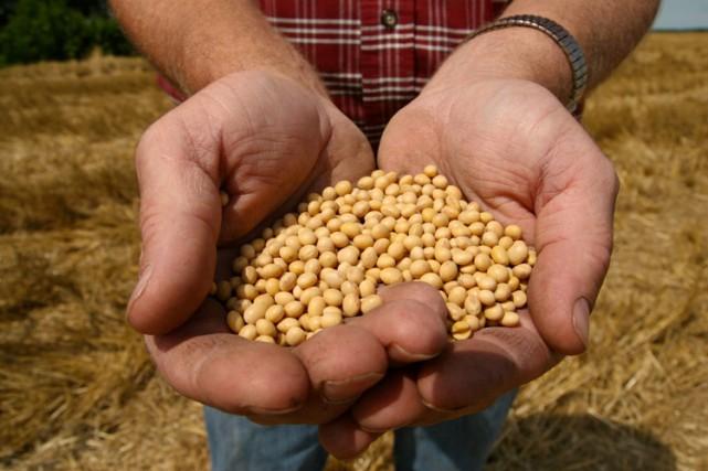 Monsanto, spécialiste des semences transgéniques, a creusé ses... (Photo AP)