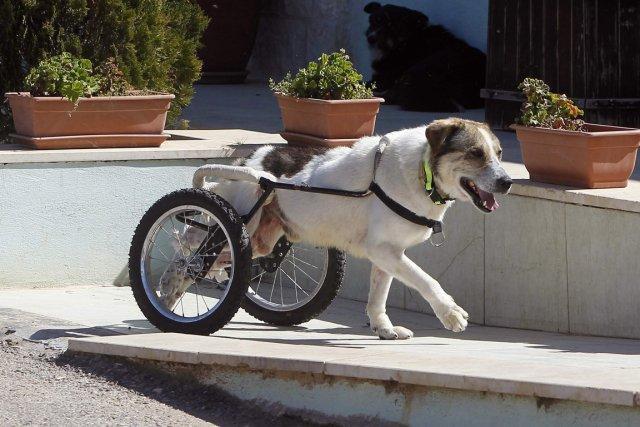 La maturité du chien intervient vers 5 ans... (Photo Reuters)