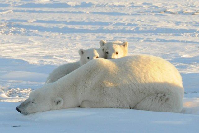 Des recherches récemment publiées affirment que les changements climatiques ont... (Photo: Reuters)