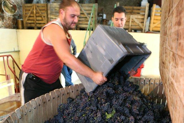 La vinification des bourgognes rouges dite en grappes entières, c'est-à-dire... (Photo AFP)