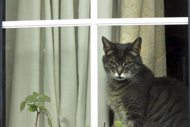 Un chat s'éduque aussi bien qu'un chien, affirme... (Photo : Kristy Wigglesworth, archives AP)