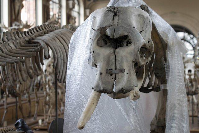 L'animal, auquel le voleur s'est attaqué, avait été... (Photo: AFP)