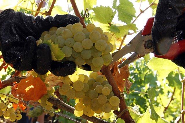 Pour le Bordelais ou la vallée du Rhône, au climat favorable à la vigne, le... (PHOTO REGIS DUVIGNAU, REUTERS)